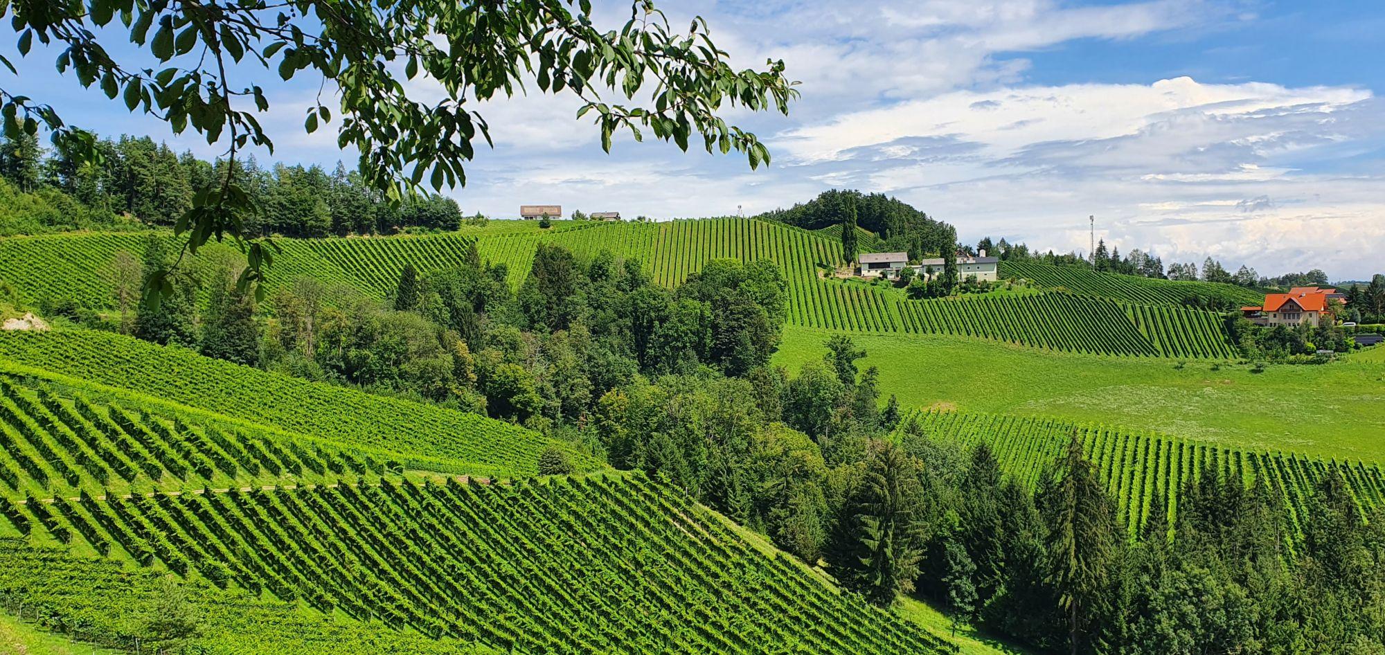 Weinberge in der Südsteiermark
